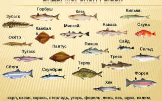 Виды морских рыб