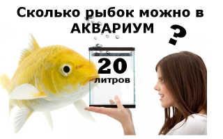 Сколько рыбок можно держать в аквариуме 20 литров