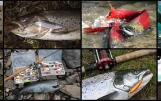 Спиннинг на лосося
