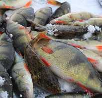 Амерьевский карьер рыбалка