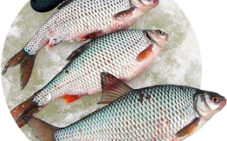 Зимняя рыбалка на сорожку