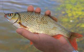 Какая рыба клюет в апреле