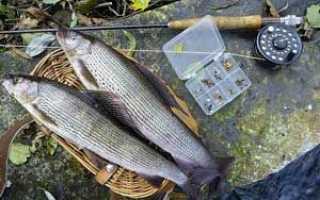 Рыбалка в сибири на хариуса