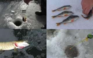 Способы ловли рыбы зимой