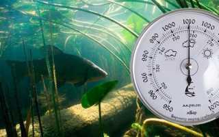 При каком давлении клюет рыба весной