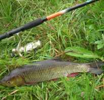 Как ловить голавля на реке