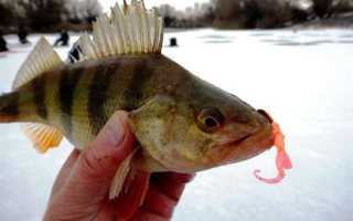 Зимняя рыбалка на джиг