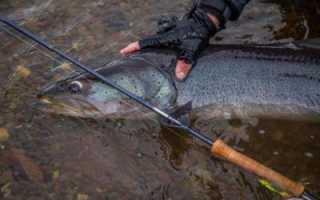 Рыбалка в сибири на тайменя