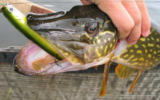 На что клюет рыба в августе