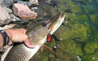 Рыбалка на блесну