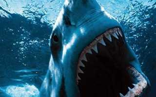Опасные акулы для человека