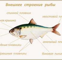 Чем питаются рыбы в реке