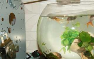 Кормушка автоматическая для рыб