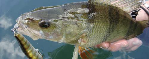 Рыбалка в конце марта