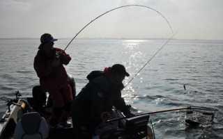 Ловля рыбы на живца