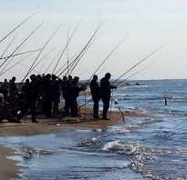 На что ловить морскую рыбу
