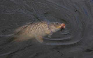 Весенняя рыбалка в апреле
