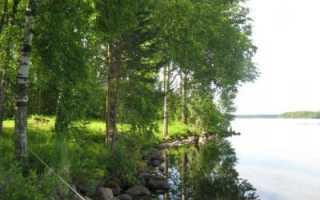 Рыбалка на гусином озере