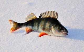 Рыбалка зимой на балду