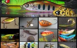Виды приманок для рыбалки