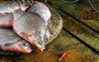 Ловля карася в июле на поплавочную удочку прикорм и насадки