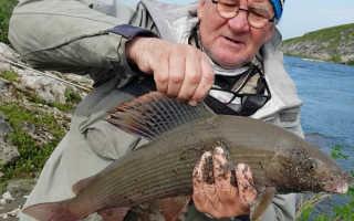 Рыбалка в коми на хариуса
