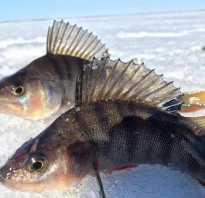 Рыбалка в хмао