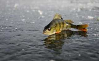 Что такое замор рыбы