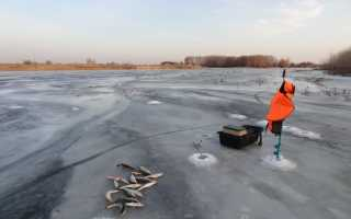 Какая рыба клюет в феврале
