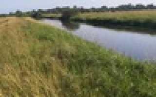 Рыбалка на реке шерна
