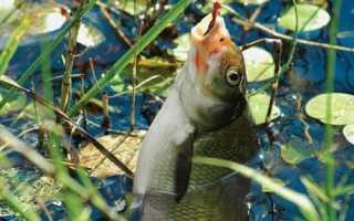Когда начинается летняя рыбалка