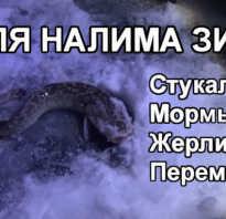 Ловля налима зимой на оби