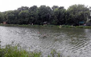 Рыбалка тимирязевские пруды