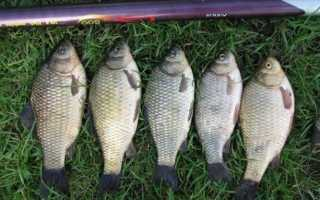 Зимняя рыбалка на белую рыбу