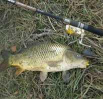 Рыбалка в октябре на карпа