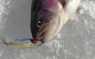 Ловля форели со льда