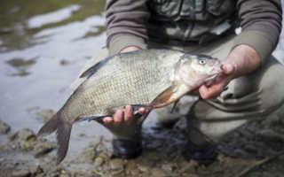 Какая рыба клюет в июне