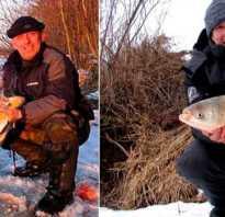 На что ловить толстолобика зимой