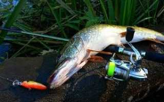 Рыбалка конец августа