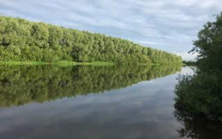 Река цна рыбалка