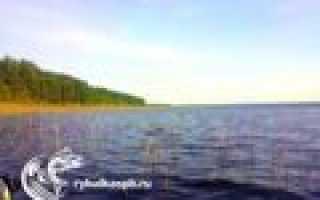 Озеро суходольское рыбалка