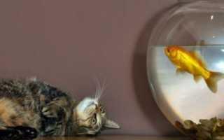 Спят ли рыбы в аквариуме