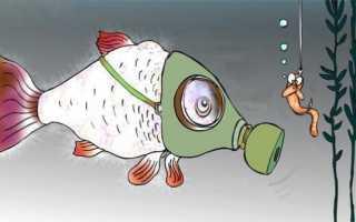 Рыбки плавают по верху аквариума