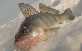 Зимняя рыбалка на берша