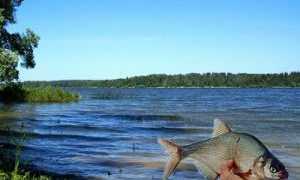 Рыбалка на реке истра