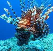 Самые необычные рыбы