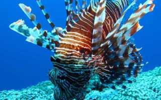 Рыбы которые живут на дне океана