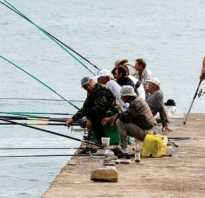 Река вьюнка рыбалка